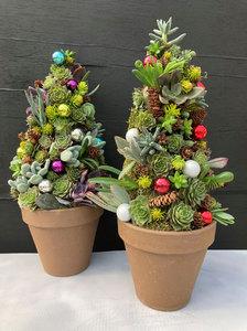 Sun Nov 15 2020 5pm, Succulent Tree, 201115171